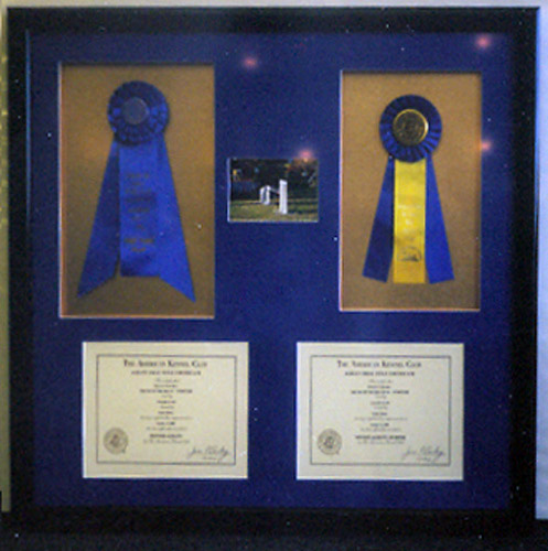 Horse Racing Ribbons, Awards & Certificates
